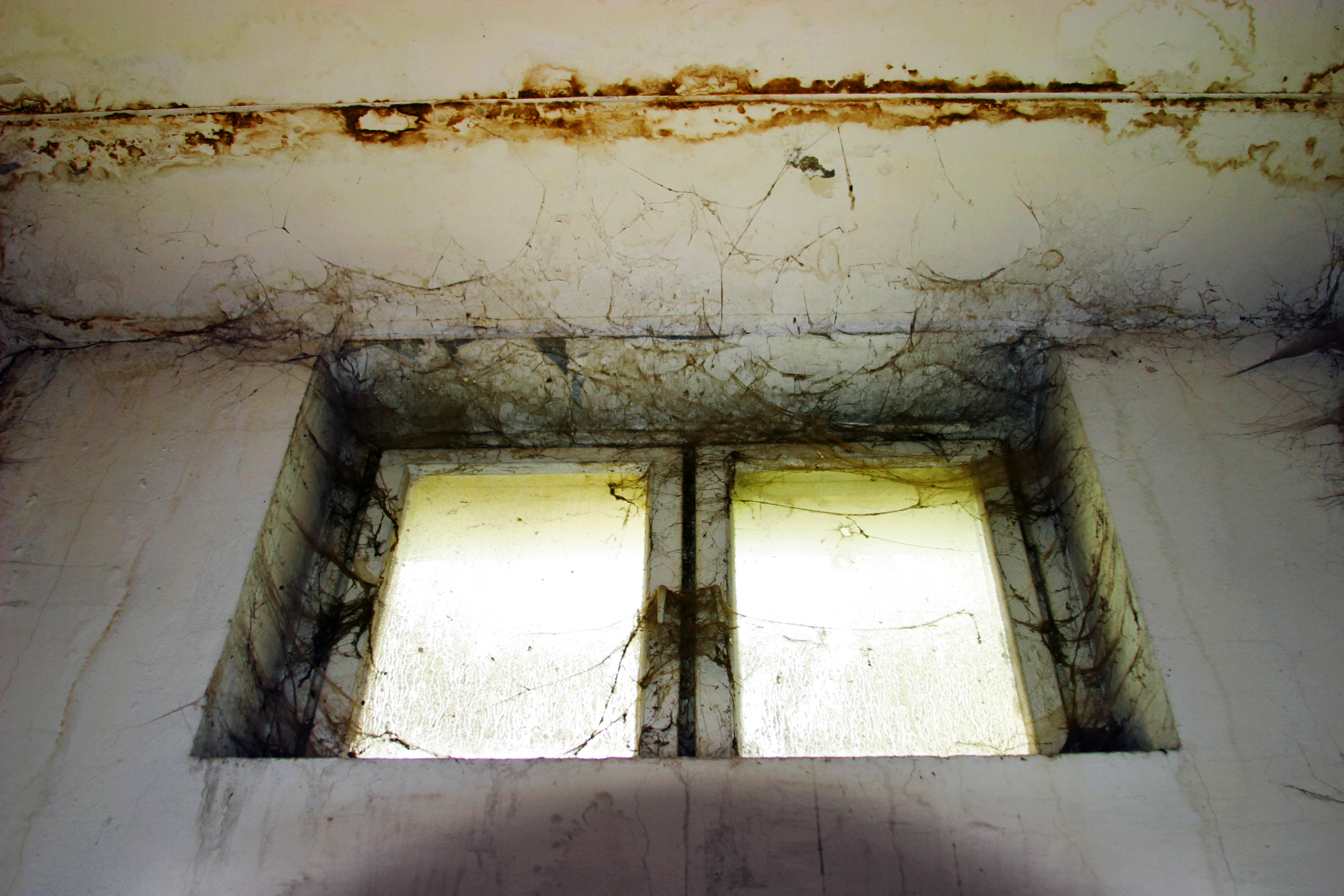 mold construction defects